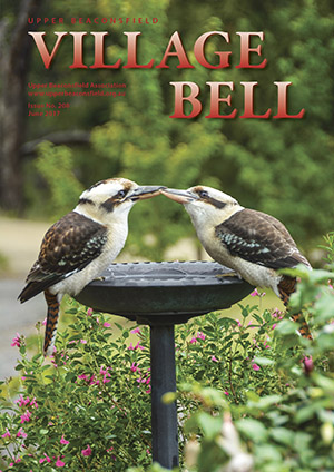 Kookaburras waiting for a feed. Cover photograph: Harry Jensen
