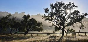 wandarrah-view